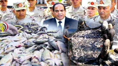 مصر: الهيمنة العسكرية على الثروة السمكية