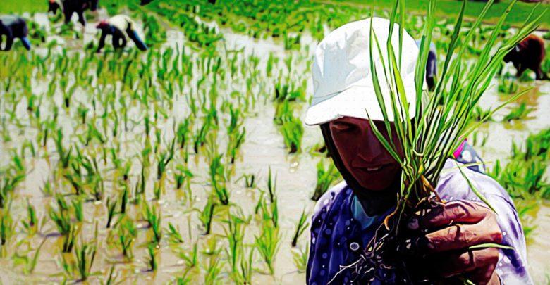 مصر وتحدياتها الاستراتيجية: الأرز نموذجاً