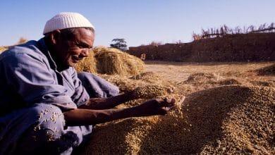 Photo of السياسات الزراعية المصرية تشجيع الكبار وسحق الصغار