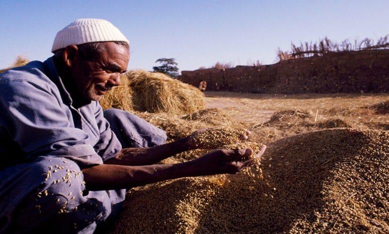 السياسات الزراعية المصرية تشجيع الكبار وسحق الصغار